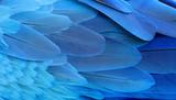 Im Blaue beflügelt