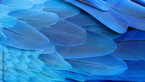 Foto op Plexiglas Papegaai Blue and gold macaw feathers.