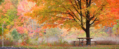 Aluminium Prints Autumn Relaxing autumn scene