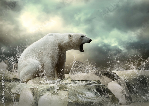 Foto op Aluminium Ijsbeer White Polar Bear Hunter on the Ice in water drops.