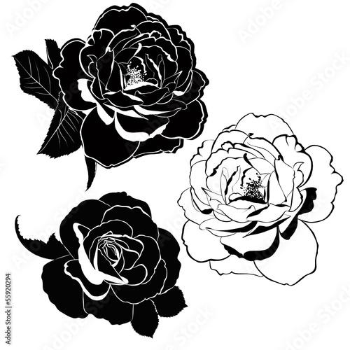 roza-kwiaty-na-bialym-tle