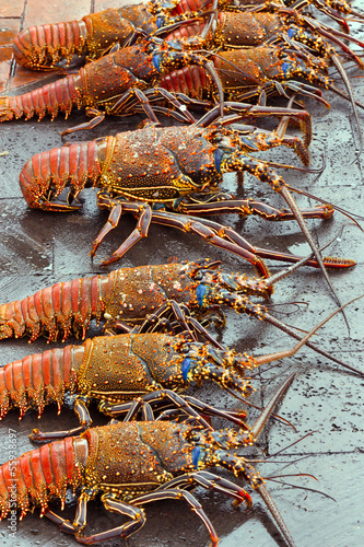 Lobsters for sale at seafood market