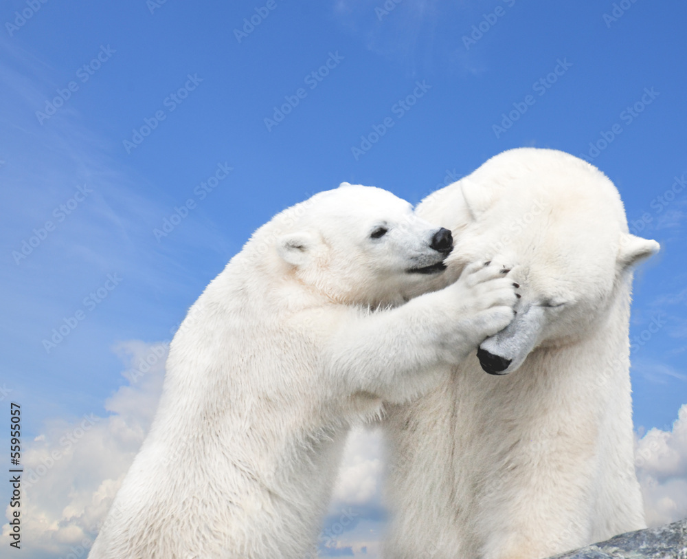 Młody słodki Miś polarny gra z matką