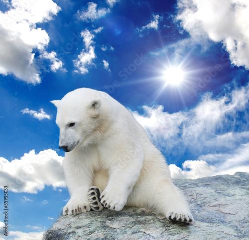 Foto-Schiebevorhang (ohne Schiene) - Young polar bear swimming (von doris oberfrank-list)
