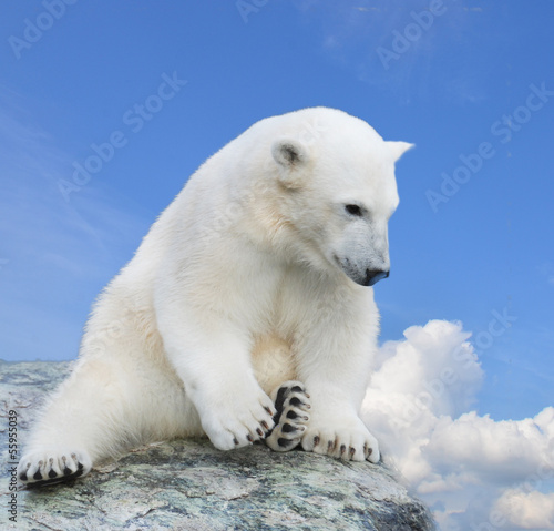 Staande foto Ijsbeer Young polar bear