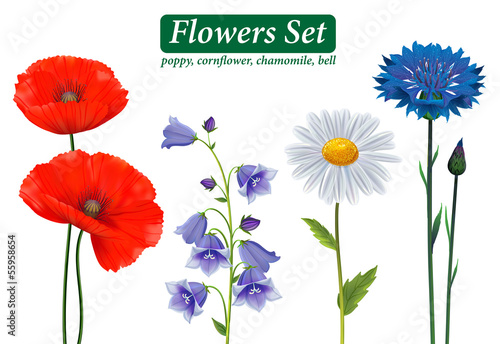 Flowers Selection Isolated on White Background. - 55958654