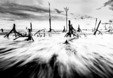 Dead Trees And Beach Black And...