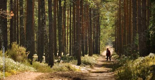 Fototapeta a person walking in the forest obraz