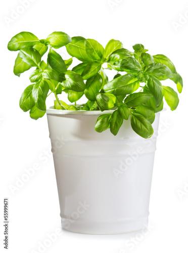 Poster Vegetal green basil