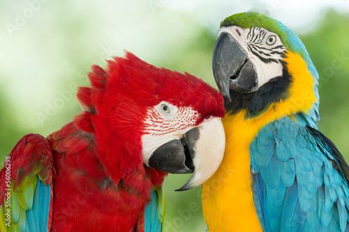 Photo parrots
