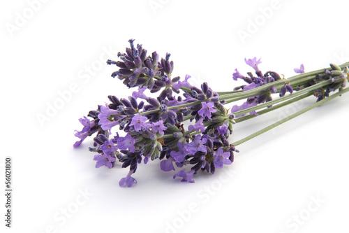 In de dag Lavendel lavande