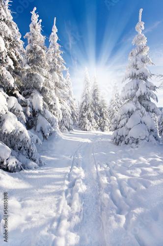 Foto-Tischdecke - Schneezauber (von Jenny Sturm)
