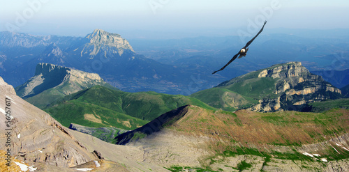 Poster Aigle eagle flying in the Pyrenees