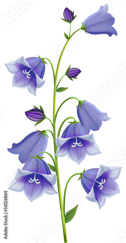 branch blue hand Campanula bell Canvas Print