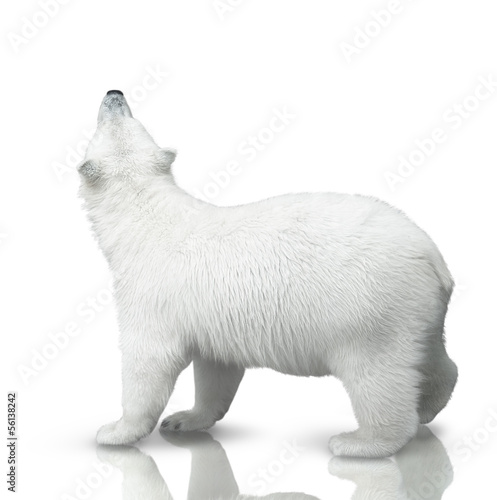 In de dag Ijsbeer small polar bear