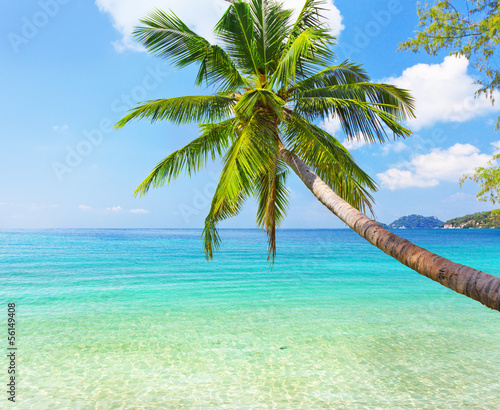 Fototapety, obrazy: sea and coconut palm