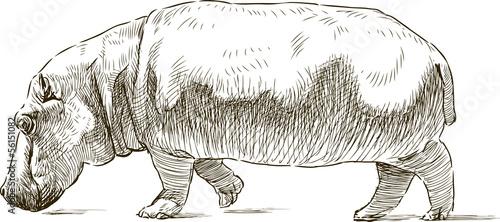 Obraz na plátne hippopotamus