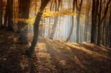 Waldfarben im Sonnenschein