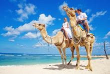 Wedding On A Camel