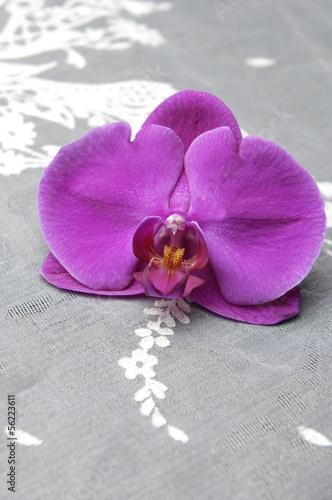 piekna-rozowa-orchidea-na-bialej-koronce