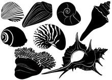 Nautilus Seashells  Anemones Isolated