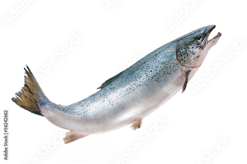 Foto Atlantic salmon