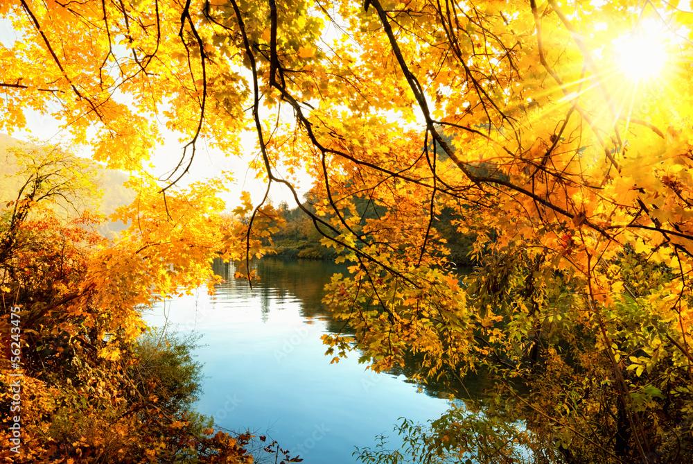 Fototapety, obrazy: Herbstsonne am Fluss