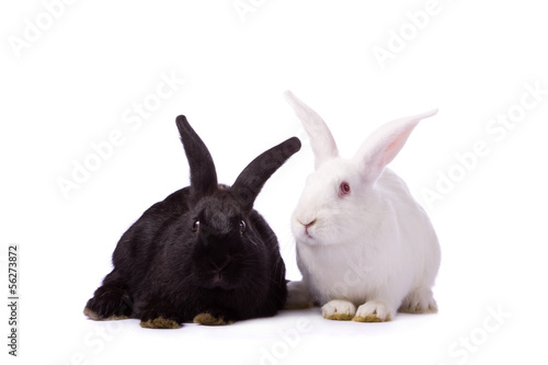 Fotografie, Obraz  Black rabbit and white rabbit isolated on white background