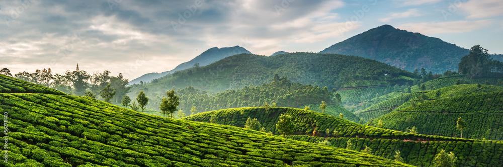 Fototapety, obrazy: Tea plantations