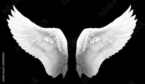 Fényképezés  Wing
