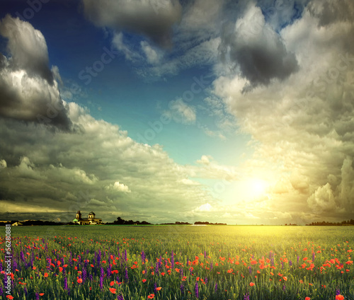field of lavender, wheat and poppies