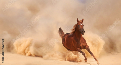 Poster de jardin Desert de sable Arabian horse running out of the Desert Storm