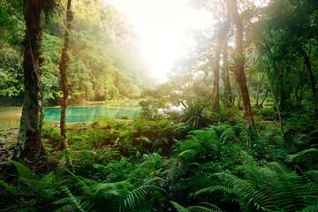Fototapeta Mysterious Mayan jungle in the national park Semuc Champey Guate