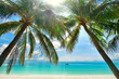 Island Paradise - Palm trees hanging over a sandy white beach