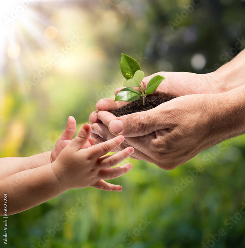 Obraz hands of a child taking a plant from the hands of a man - garden - fototapety do salonu