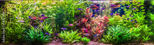 Fotografia Ttropical freshwater aquarium with fishes