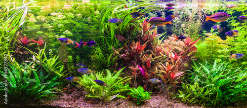 Ttropical freshwater aquarium with fishes #56327844
