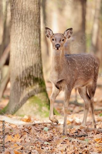 Deurstickers Hert Deer