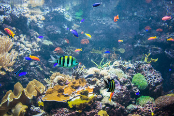 Fototapeta na wymiar Tropical fish under the water