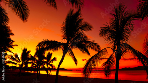 Foto-Kissen - Palms silhouettes on a tropical beach at sunset