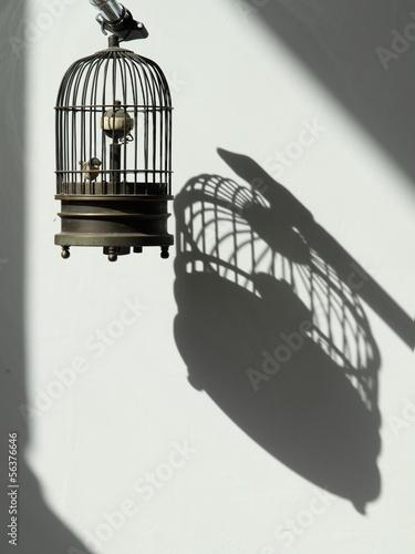 Fényképezés  birdcage
