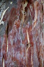 Sycamore Tree Texture