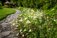 Wildflower Garden And Path To ...