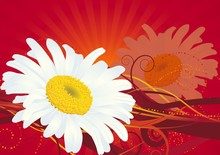 Daisies On A Red Background . Vector.