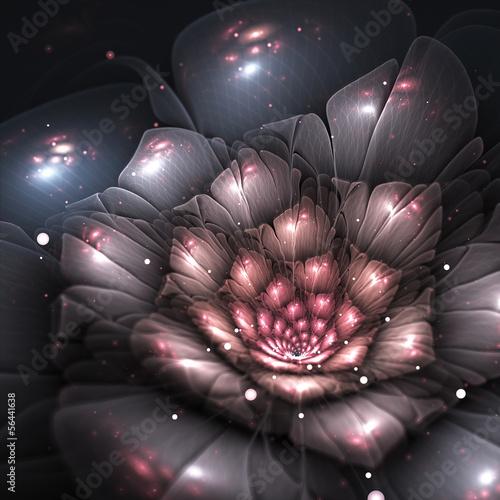 cien-streszczenie-kwiat-z-rozowymi-detalami