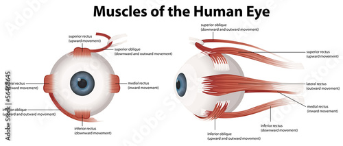 Muscles of the Human Eye Canvas Print