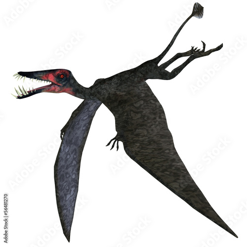 Fotomural Dorygnathus Pterosaur on White
