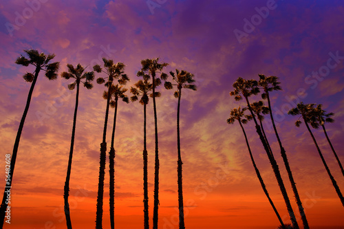 Photo  California palm trees sunset with colorful sky