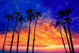 California palm trees sunset with colorful sky - 56482822