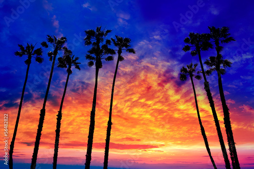 Poster Los Angeles California palm trees sunset with colorful sky